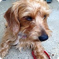 Adopt A Pet :: Spanky (Bernie) - Newport, KY
