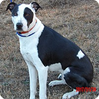 Adopt A Pet :: Gypsy(60 lb)Perfect Family Pet - West Sand Lake, NY