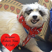 Adopt A Pet :: Rocky - San Leon, TX