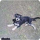 Adopt A Pet :: Tanner & Jordan