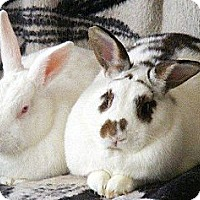 Adopt A Pet :: George & Gracie - Williston, FL