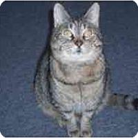 Adopt A Pet :: Jumpy - Hamburg, NY