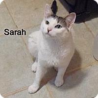 Adopt A Pet :: Sarah - Catasauqua, PA