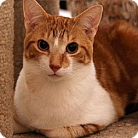 Adopt A Pet :: Nemo - Sterling Heights, MI