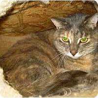 Adopt A Pet :: Jovi - Warminster, PA