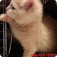 Adopt A Pet :: TEDDY - Acme, PA