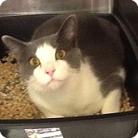 Adopt A Pet :: Jessee - Colmar, PA