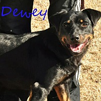 Rottweiler Mix Dog for adoption in Davis, Oklahoma - Dewey OKs31