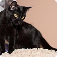 Adopt A Pet :: Beth - Philadelphia, PA