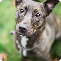 Adopt A Pet :: Jina - Youngstown, OH
