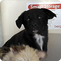 Adopt A Pet :: GINNIE, CINDIEAND SUZIE - Winnetka, CA
