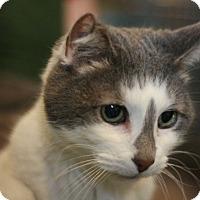 Adopt A Pet :: Minnie - Canoga Park, CA
