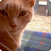 Adopt A Pet :: Bert - Middletown, OH