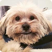 Adopt A Pet :: HI! I'm George! - Los Angeles, CA