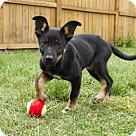 Adopt A Pet :: PUPPY NASH