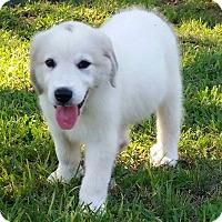 Adopt A Pet :: Austin - Kyle, TX