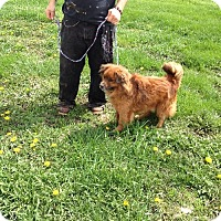 Adopt A Pet :: Cherry/Henry - Colfax, IL