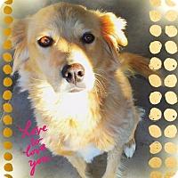 Adopt A Pet :: SANDIE - Chandler, AZ