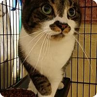 Adopt A Pet :: Mysti - Berlin, CT