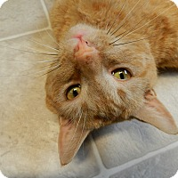 Adopt A Pet :: Mickey - Plainville, MA