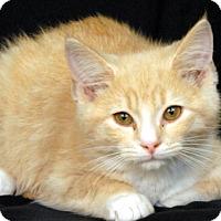 Adopt A Pet :: Fluff Buff - Newland, NC