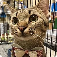 Adopt A Pet :: Gail - Tega Cay, SC