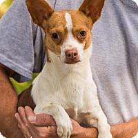 Adopt A Pet :: Skip - Clarkesville, GA