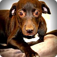 Adopt A Pet :: Onyx~ meet me! - Glastonbury, CT