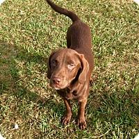 Adopt A Pet :: Stacey - New Smyrna beach, FL