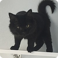 Adopt A Pet :: Amidala - Greensburg, PA