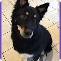 Adopt A Pet :: Vanessa - Elburn, IL