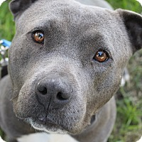 Adopt A Pet :: Hayley - Tracy, CA