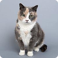 Adopt A Pet :: Tippy - Wilmington, DE