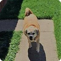 Adopt A Pet :: Katie - Rowlett, TX