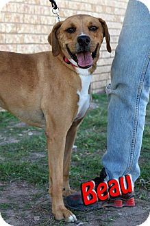 Boxer Mix Dog for adoption in Midland, Texas - Beau