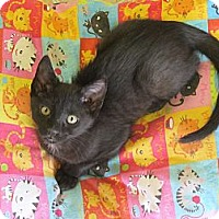 Adopt A Pet :: Mittens - Mobile, AL