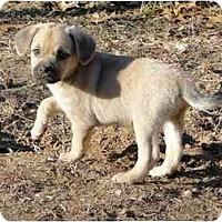 Adopt A Pet :: Dipstick - Arlington, TX