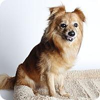 Adopt A Pet :: Parker - Oakland, CA