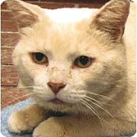Adopt A Pet :: Romeo - Centerburg, OH