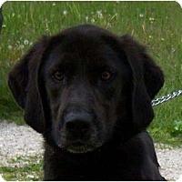 Adopt A Pet :: Doogie - Antioch, IL