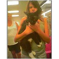 Adopt A Pet :: Bangles - Owasso, OK