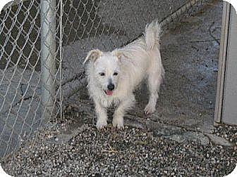 Terrier (Unknown Type, Medium) Mix Dog for adoption in Sherman Oaks, California - Benji