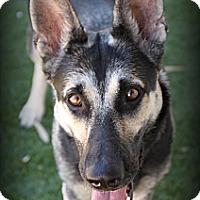 Adopt A Pet :: Zuma - Phoenix, AZ