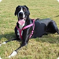 Adopt A Pet :: *Minnie - PENDING - Westport, CT