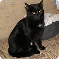 Adopt A Pet :: Guido Sarducci - Dover, OH