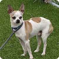 Adopt A Pet :: Burton - Meridian, ID