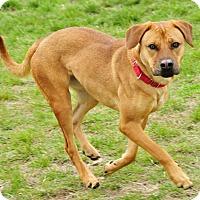 Adopt A Pet :: Lacey - Hillsboro, TX