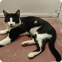 Adopt A Pet :: Rocky - Wakinsville, GA