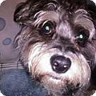 Adopt A Pet :: Herbie