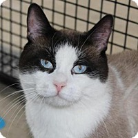 Adopt A Pet :: Antonio - Caistor Centre, ON